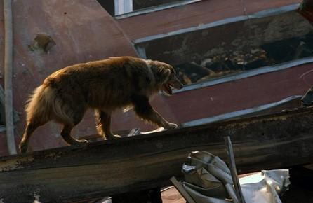 Dog walking on beam